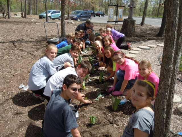 Planting Iris'